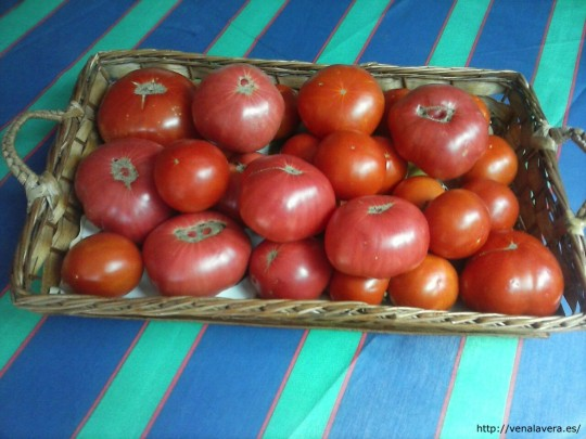 Receta de Mermelada de Tomate